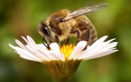 Что делать? Пчелы и муравьи на пасеке