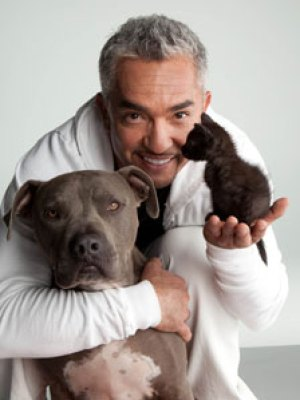 Cute Amimals Doing Cute Things Cesar Millan