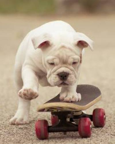 Cute Puppy Skateboarding