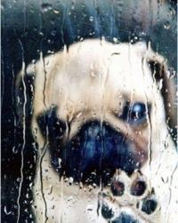 Raining Cats and Dogs - Common Sayings