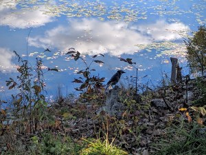 Nature - a rhapsody in blue - jay and lake