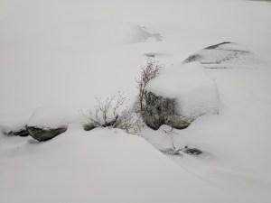 Winter - awaiting metamorphosis