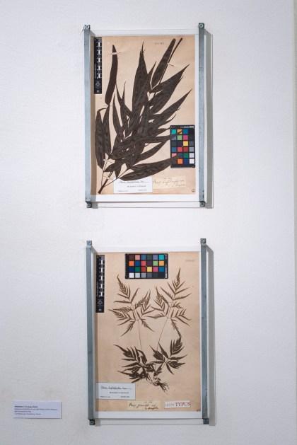6.Herbarium di Giuseppe Raddi, scansione scientifica a cura del Museo e Orto Botanico di Pisa