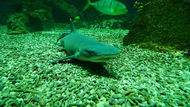 viena_Haus des Meeres aquário