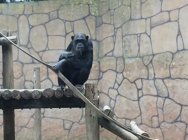 parque-beto-carrero-zoo