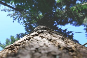 arbre Cabinet sophrologie thérapie ACP/Focusing Alexandre Jacquelin Annecy Doussard