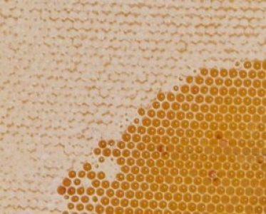 мед в сотах