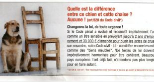 France : la loi considère les animaux comme des meubles
