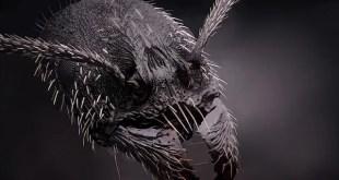 Une tête de fourmi