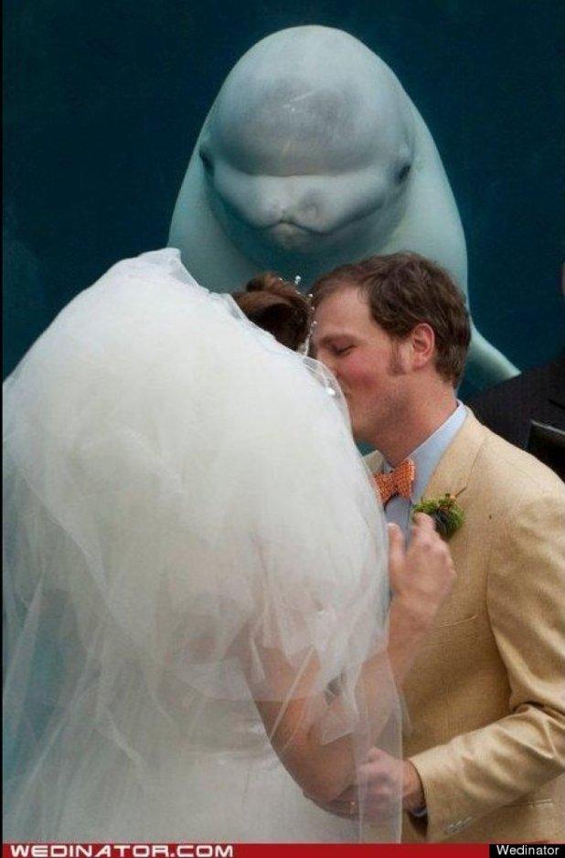 """""""Vous pouvez embrasser la mariée"""""""