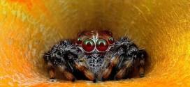 Oserez-vous regarder ces araignées dans les yeux?