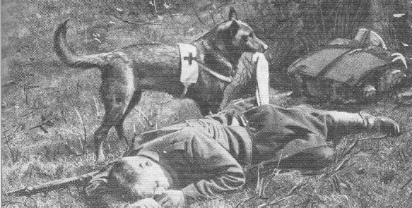 Dossier : les animaux de guerre