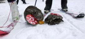 Une tortue bat un lapin dans une course de ski en Chine