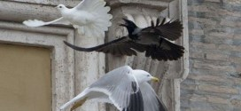 Les colombes lâchées par le pape attaquées par d'autres oiseaux