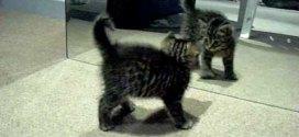 Vidéo : quand un chaton joue avec son reflet dans le miroir