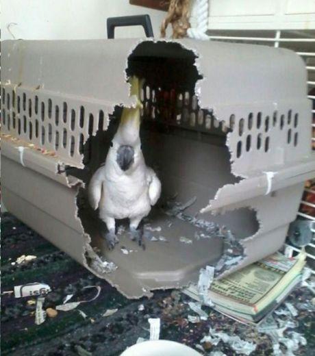 cet-oiseau-a-tout-detruit-sur-son-passage-dans-un-seul-but-etre-libre_124509_w460