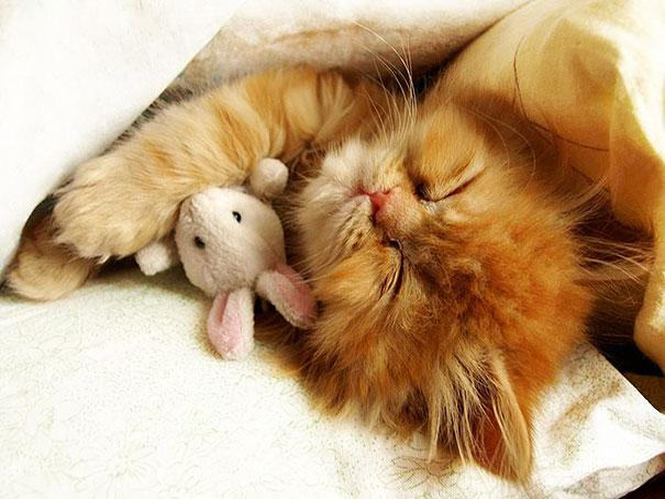 cute-animals-sleeping-stuffed-toys-19