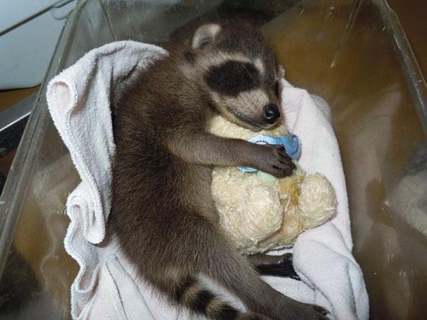 cute-animals-sleeping-stuffed-toys-36