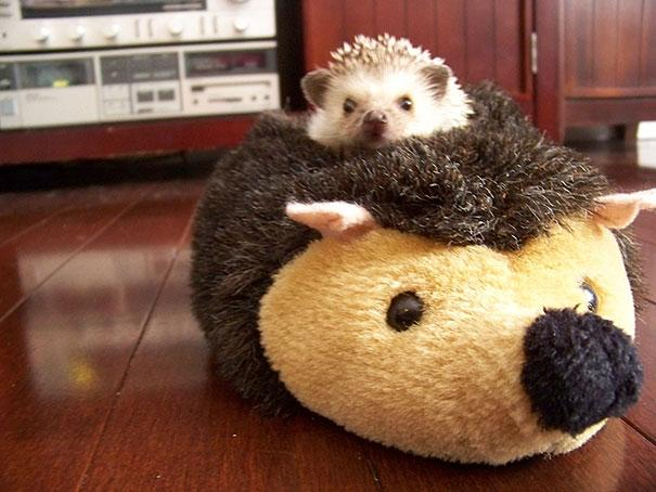 cute-animals-sleeping-stuffed-toys-38