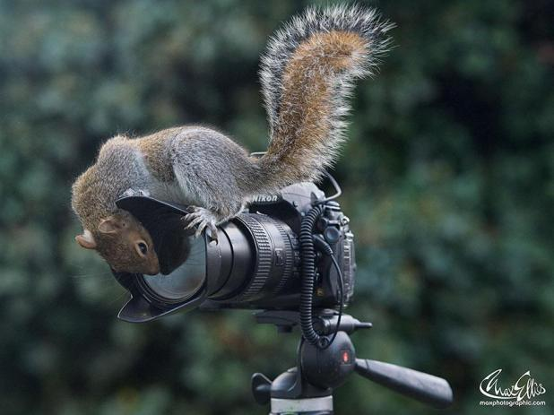 wildlife-photography-squirrels-max-ellis-15__880