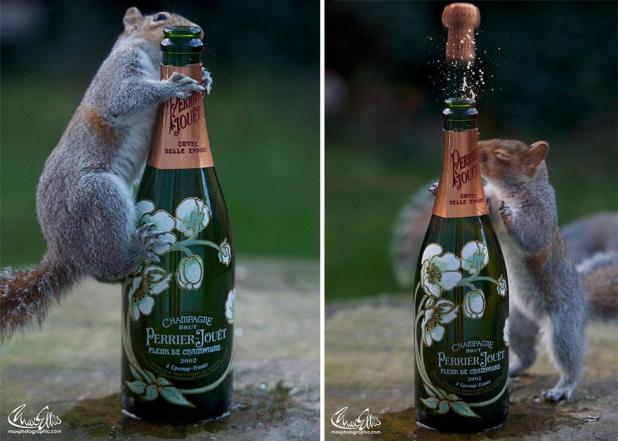wildlife-photography-squirrels-max-ellis-17__880