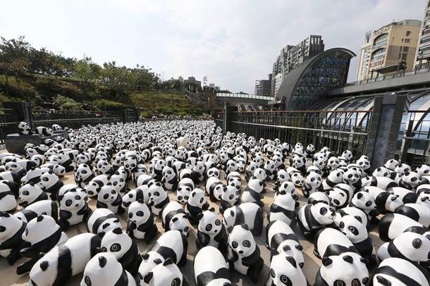 1600-Panda-9