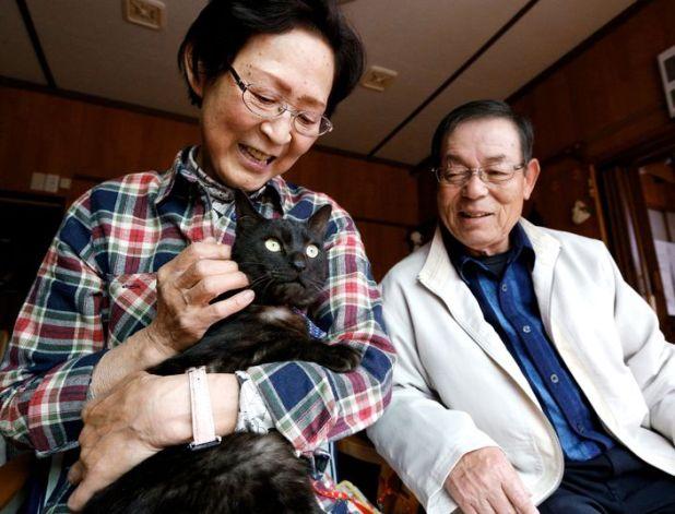Japon : ils retrouvent leur chat trois ans après le tsunami