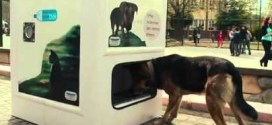 Recyclez vos bouteilles et donnez à manger aux chiens errants