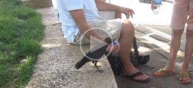 Vidéo : cet oiseau a soif et sait le faire comprendre!