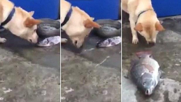 Vidéo : ce chien essaie de sauver des poissons, à sa manière