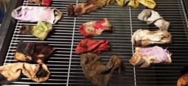 43 chaussettes retrouvées dans le ventre d'un chien