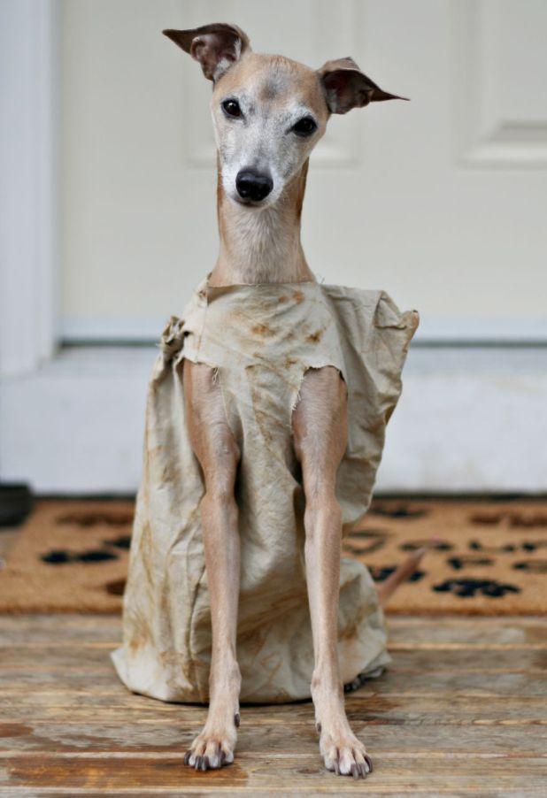Halloween-Pet-Costumes13__880