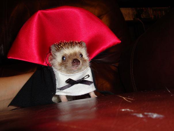 pet-halloween-costume-301__605