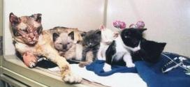 Une maman chat sauve ses chatons d'un incendie