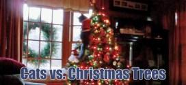 Vidéo. Quand les chats attaquent les sapins de Noël (compilation)