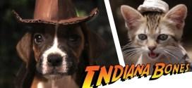 Vidéo. Indiana Bones et les Aventuriers de l'Aboiement Perdu