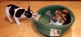 Vidéo. Un chiot veut récupérer son panier squatté par un chat