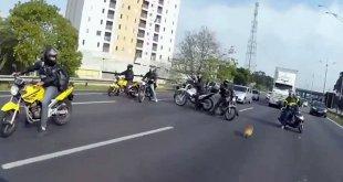 Vidéo. Un chien sauvé par un groupe de motards