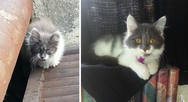 rescue-cat-abandoned-before-after-132__700