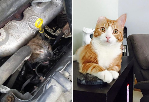 rescue-cat-abandoned-before-after-33__700