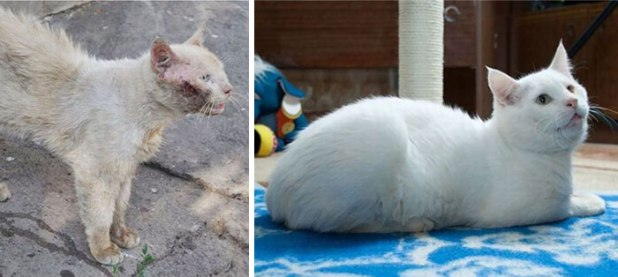 rescue-cat-abandoned-before-after-92__700