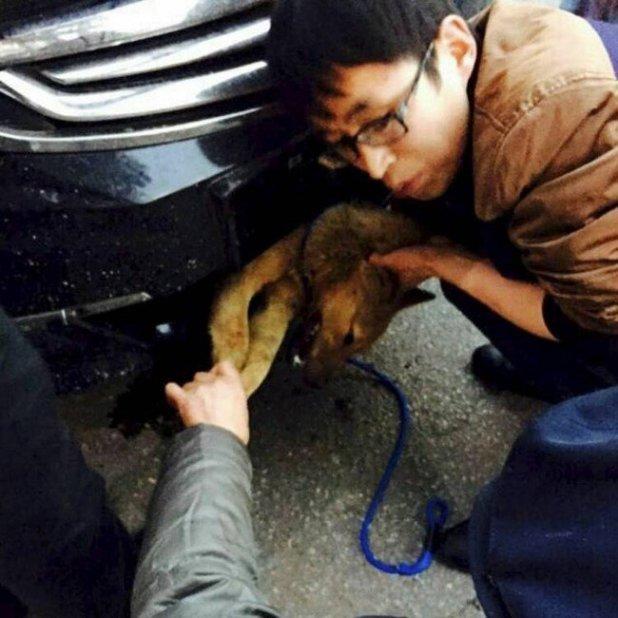 Il roule près de 400 km avec un chien coincé dans le pare-choc