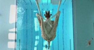 Vidéo. Avez-vous déjà vu des girafes plonger de 5 mètres 80 ?