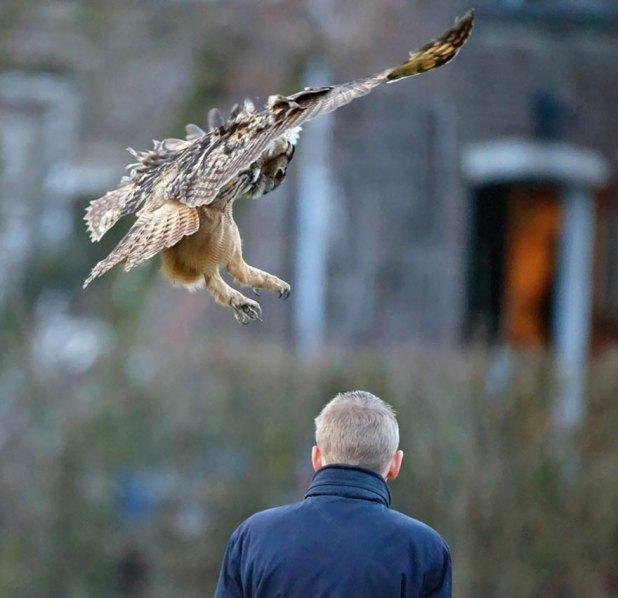 owl-lands-on-head-netherlands-noordeinde-4