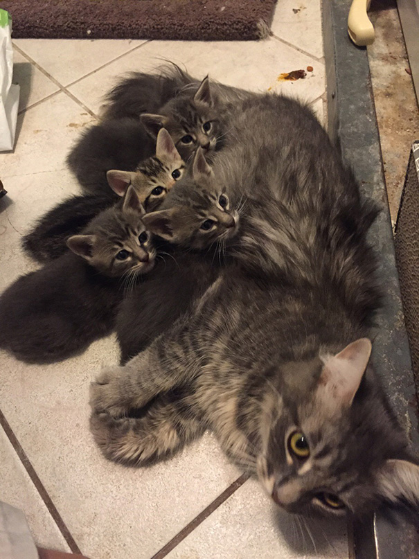 proud-cat-mommies-211__605