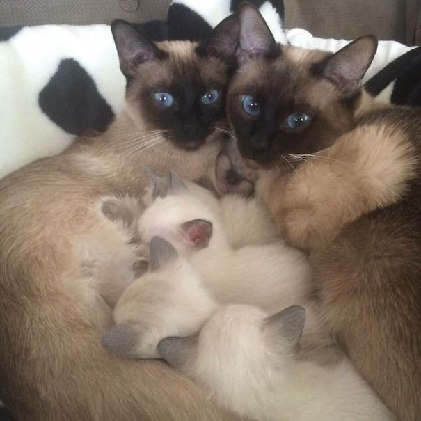proud-cat-mommies-251__605