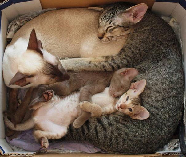 proud-cat-mommies-321__605