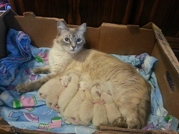 proud-cat-mommies-41__605