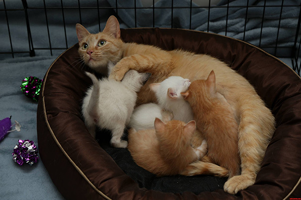 proud-cat-mommies-42__605
