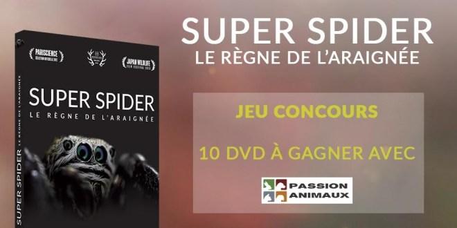Concours : 10 DVD « Le règne de l'araignée » à gagner!